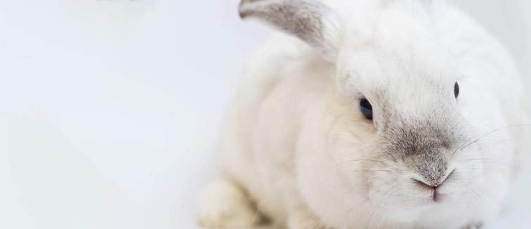 Top 10 Cruelty-Free Haircare Brands